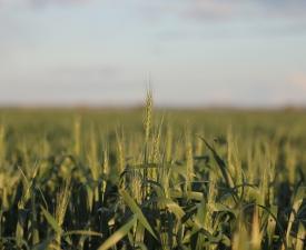 Business_Units_Farming_Crop1