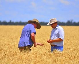 0009_Business Units_Grain